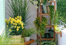 Balcony/Garden inspiration