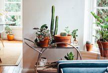 Plant Life / Nature