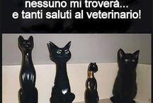 Gatti / Meow