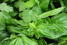 How to Use Herbs for Health / Learn about how to use herbs for health and how to cook with herbs.