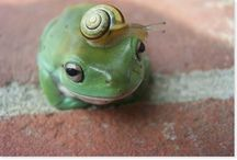 Amphibians!  / by Maggie Faber