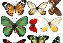 бабочки и др насек