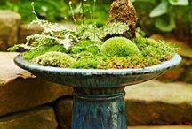 dish moss garden