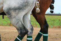 Hair for horse