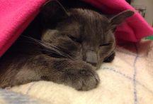 Vida de un gato Felv / Fotografías de un gato super feliz
