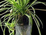 smarta planteringar mm