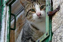 Gatti / Alcune foto di gatti di vario genere !