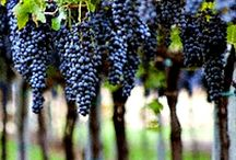 Vineyards and Grapes / Images of vineyards and grapes -- beautiful!