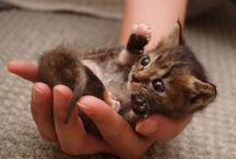 Oh in the name of CUTENESS / by Christine McNamee