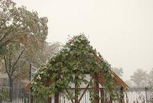 green house love