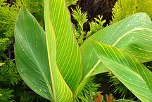 Plants for a Tropical Look