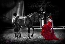 Jerez de la Frontera koně