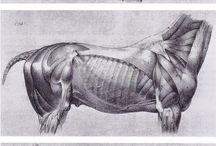 Rajz,anatomia