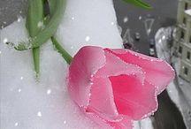 цветы из мастики / by Ромашка