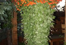 Landscape: Container Gardens / by Kimberly Smith