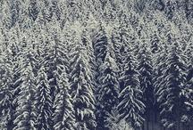 Winter Wonderland ✈