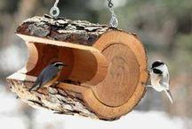 lintujen ruokinta ja pöntöt