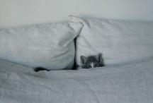 Cats / by Donna Burkhead