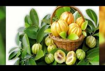 Garciniacambogiapremium.net / While Garcinia Cambogia is being touted as an excellent weight loss product, it's actually good for much more than just losing weight. Try this site http://garciniacambogiapremium.net for more information on Garcinia Cambogia Free Trial.  It has many other health benefits that anyone can benefit from, so if you don't need or want to lose weight, you can still take Garcinia Cambogia supplements to improve your health. Go for Garcinia Cambogia Free Trial and get healthy.