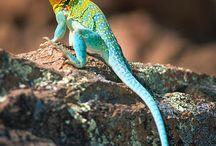 Nature template - reptiles, amphibians