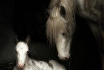 Perde / Horses