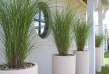 Potted Greenery Pool Area
