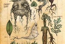 ***Planches Botanique***