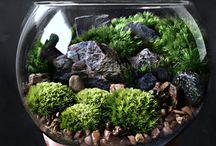 Pflanzen Terrarium Miniature