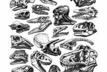 Dinosaurios ☄️