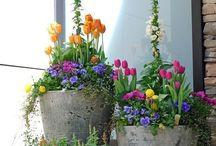 flori, grădini,  inspirație,  expiratie