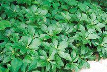 Eric Q. Plants