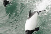 Fauna - Дельфины