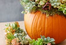 Kert - őszi dekor