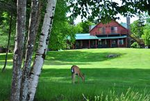 Tomhegan Lodge Rental on Moosehead Lake, Maine / Tomhegan Camps is a Wilderness Camps on a Wildlife Sanctuary on Moosehead Lake, Maine.  The lodge sleeps 26 and is great for large groups of any kind from weddings to family reunions!