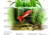 Fish and fishing tips.