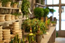 Potting shed * Pots