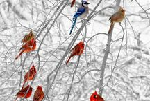 Birds,great and small. / Colour, variety and a sense of freedom.