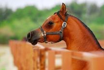 Horses / by Tori Barka