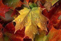 Seasons || Autumn ||