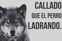 él lobo callado