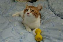 yosaku(与作)とmalu(まる) / 我が家のにゃんこ #cat
