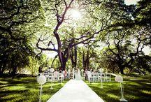 モアナルアガーデン・プリンスロット フラパ / ハワイ・オアフ島「モアナルアガーデン・プリンスロット フラパ」のウェディングボード。  オアフ島の観光スポットでも有名な公園「モアナルアガーデン」。 CMソングでも有名なモンキーポッドの樹木がこの場所の象徴です♪ フラの聖地でもある会場での儀式は、おふたりの誓いを神聖なものにしてくれます♡