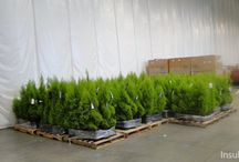 Floral Distributor | Insulated Warehouse Curtain Wall | Tropical Plant Room / Randall's InsulWall®, insulated warehouse curtain wall, creates tropical plant room