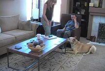 Jedi Kennedy / our pound pup