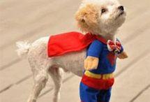 "Prestigious Puppy ""Costume Crazy"" / by Prestigious Puppy"