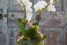Orchids Art