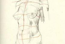 Anatomy - Torso/Body