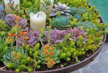 jardín Isabel