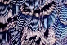 feather painting s