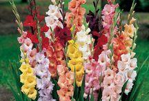 virágok a kertbe